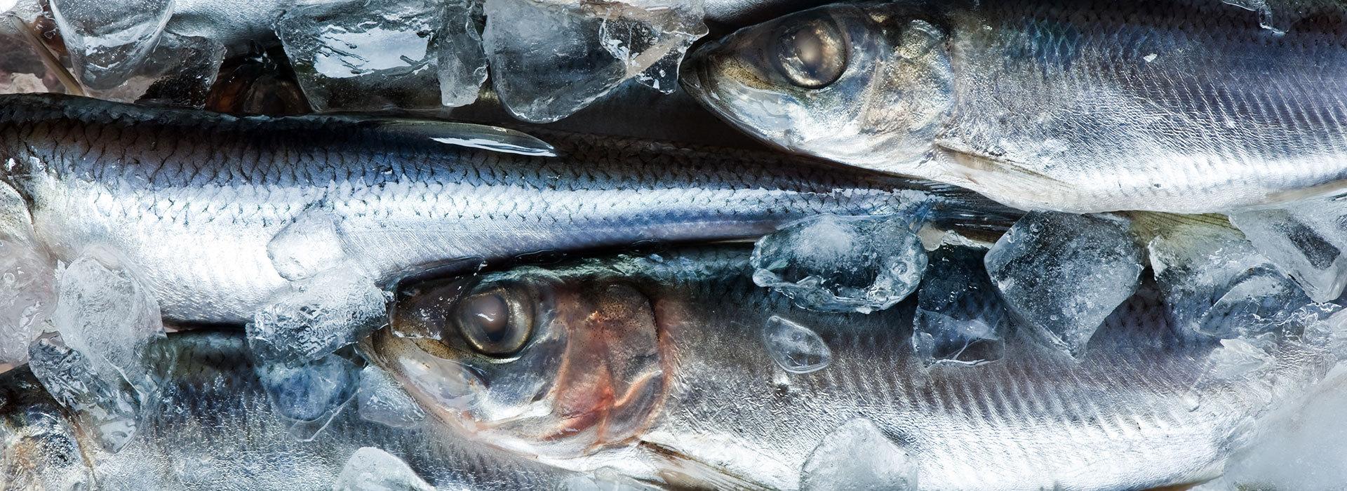 göta fisk och delikatesser
